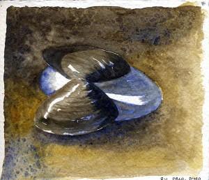 091414 Sunset Bch shells