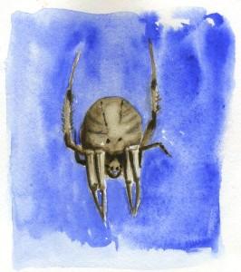 101015-Spider_800