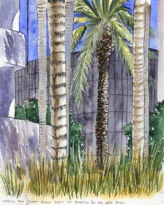 071516-Courtyard-Palms