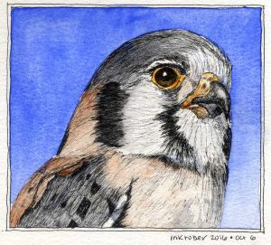 100616-inktober-kestrel-head-portrait