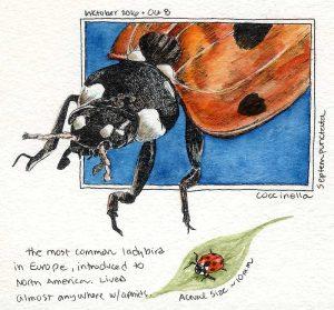 100816-inktober-7-spot-ladybug