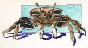 101016-inktober-fiddler-crab