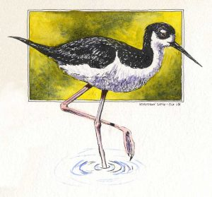 101516-inktober-black-neck-stilt-bird