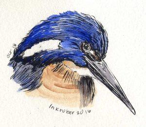 101816-inktober-azure-kingfisher