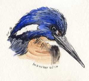 101816-inktober-azure-kingfisher-fixed
