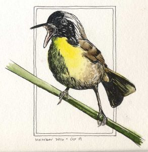 101916-inktober-common-yellowthroat