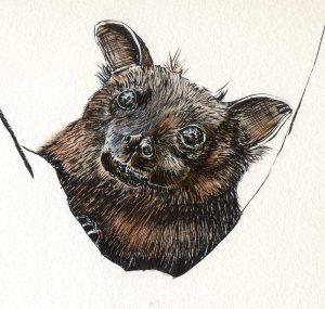 102316-inktober-fruit-bat-portrait
