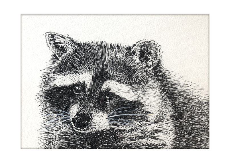 102916-inktober-raccoon-final