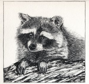102916-inktober-raccoon-with-feet