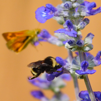Photo of bumblebee on a flower, link to Photography gallery