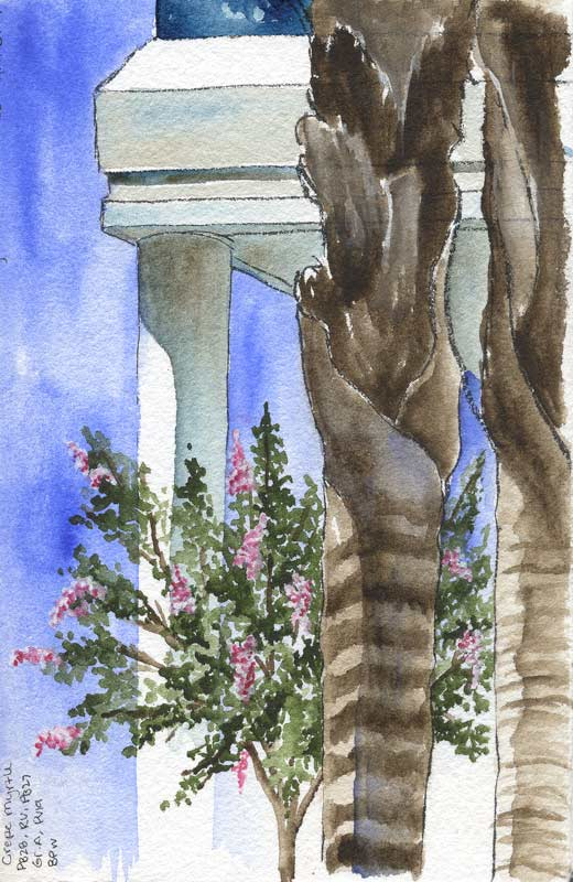 Watercolor sketch of a flowering crepe myrtle tree in a corporate office park.
